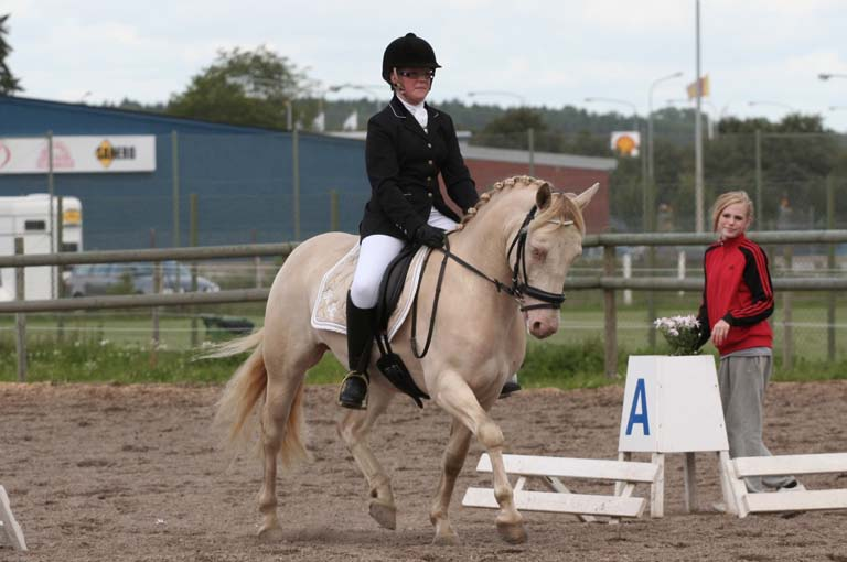 Figure 1: Tic Tac (by Countach Campbell out of K ̈ohls Rapsodi), taking the second place at last year's Swedish Connemara dressage Championships. Photo: Jenny Hagenblad