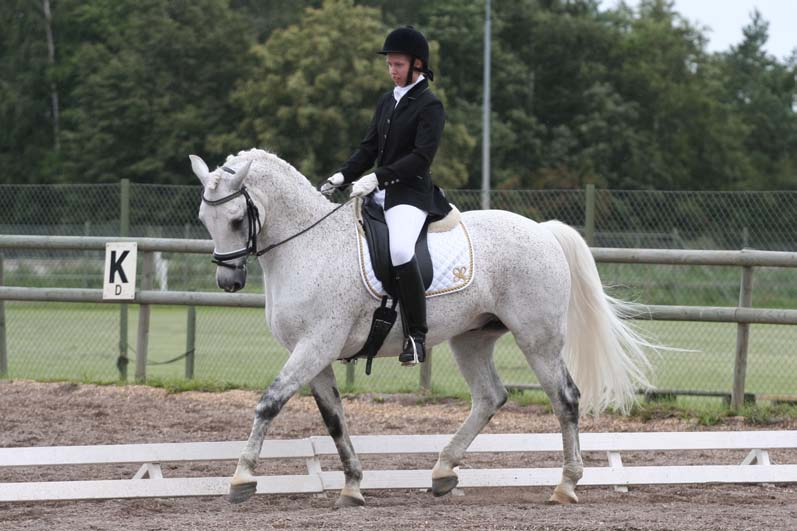 Figure 1: Pyramus (by Janus out of Olympia II), presently ranked 28 of the dressage ponies in Sweden. Photo: Jenny Hagenblad