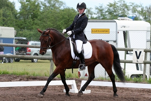 Figure 1: Lofty Roseanne (by Ashfield Cathal Crobdhearg out of Rolo), newcomer among the top 100 dressage ponies. Photo: Jenny Hagenblad