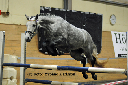 Figure 5: Lofty Fionnuala (by Castleside JJ out of Lofty Fiona), winner of the national three-year-olds finals in jumping. Photo: Yvonne Karlsson