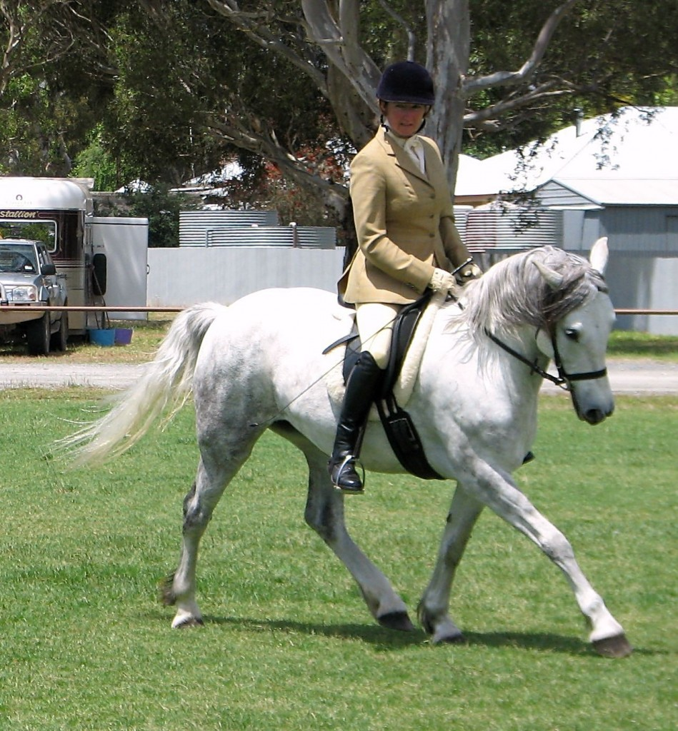 (Wychwood Happy Songbird competing in a ridden class with Kylie Watson)