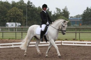 Figure 1: O'Neil (by Hagens O'Chief out of Nelly Dun). Placed eighth in the Connemara dressage ranking of 2010 and presently in 50th place among all breeds. Photo: Jenny Hagenblad