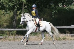 Figure 2: Lidens Mr Li (by Janus out of May-Li). Highest placed Connemara in the eventing ranking and placed tenth in the dressage ranking of 2010. Photo: Jenny Hagen- blad
