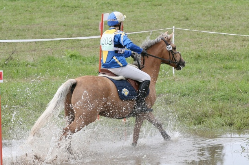 Figure 2: Mosquito R (by Calvin Klein out of Marion Jones S), third best Connemara in eventing. Photo: Jenny Hagenblad