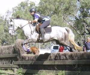 TJ – Partbred by Boonahburra Braveheart