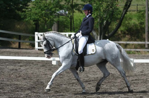 Figure 1: Hagens Rosmara (by V ̈arnbergs Orion out of Hagens Andora) ridden by Anna Andersson. Photo: Jenny Hagenblad