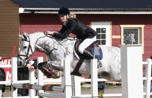 Figure 3: Some Man For One Man (by Ashfield Bobby Sparrow out of Misty Maiden) ridden by Alma Bj ̈orklund Photo: Jenny Hagenblad